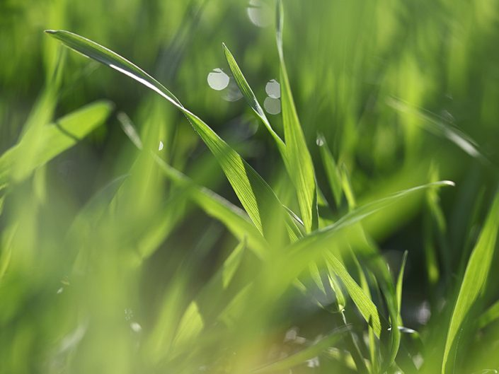 Grass 2014
