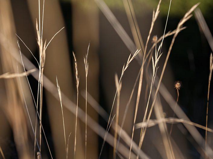 Grass 2017